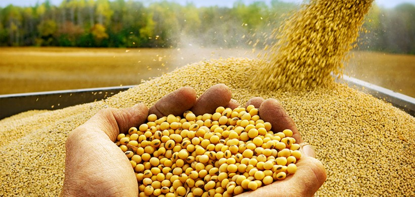 Image result for soybean